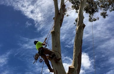 tree removal services Newcastle